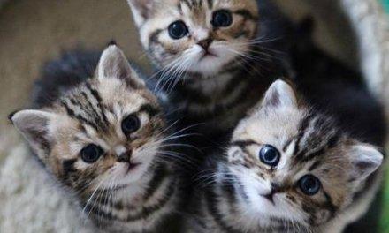قطط مسكنهنّ جامعة بيرزيت.. فكيف ينظر لهنّ طلابها؟